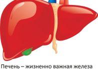 Лекарства для восстановления печени