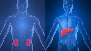 Принимать Баклофен нужно осторожно при частичной дисфункции печени и почек